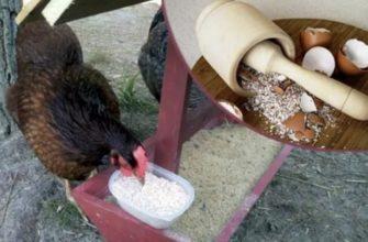 Источник кальция для кур