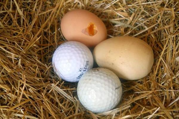 яйца и теннисные мячики в гнезде
