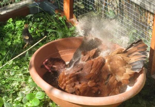 Зольная ванна